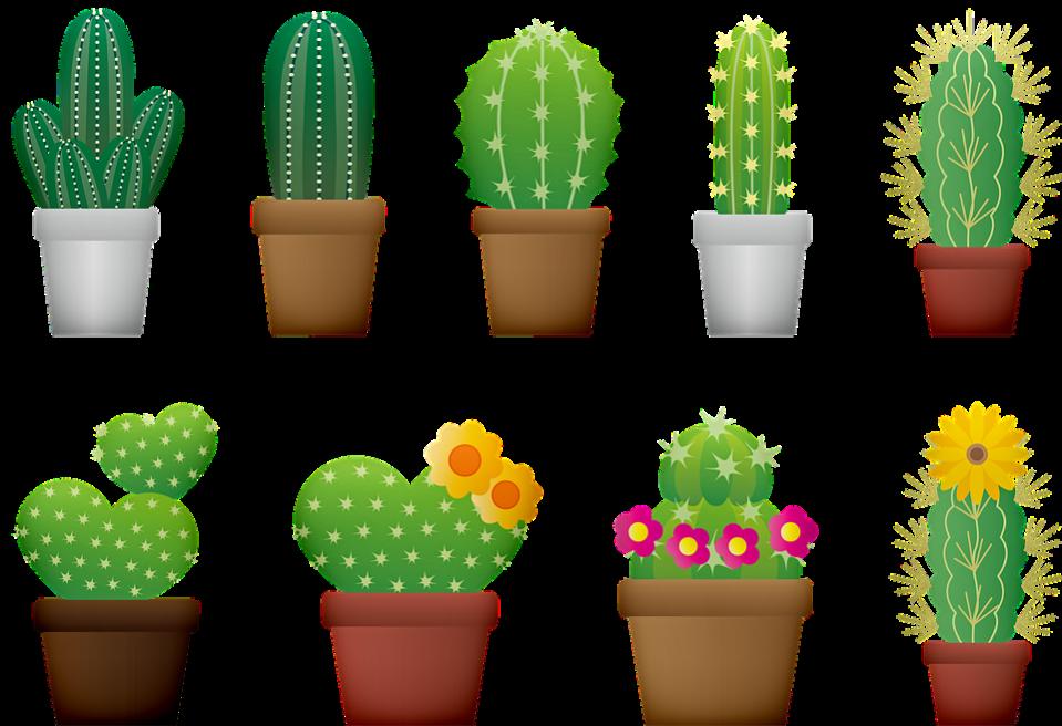 cactus-3611311_960_720