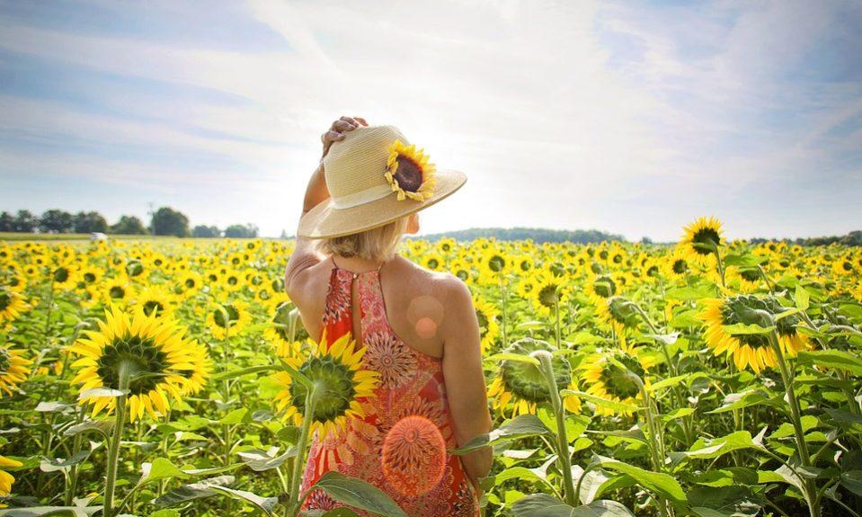 sunflowers-3640935_960_720