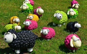 sheep-1437618_960_720