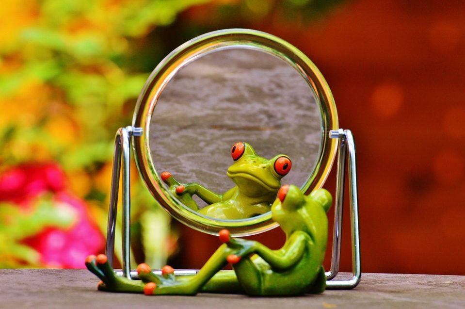 frog-1499162_960_720