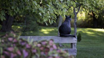 black-cat-4507309_960_720