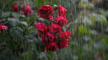 heavy-rain-4864257_960_720